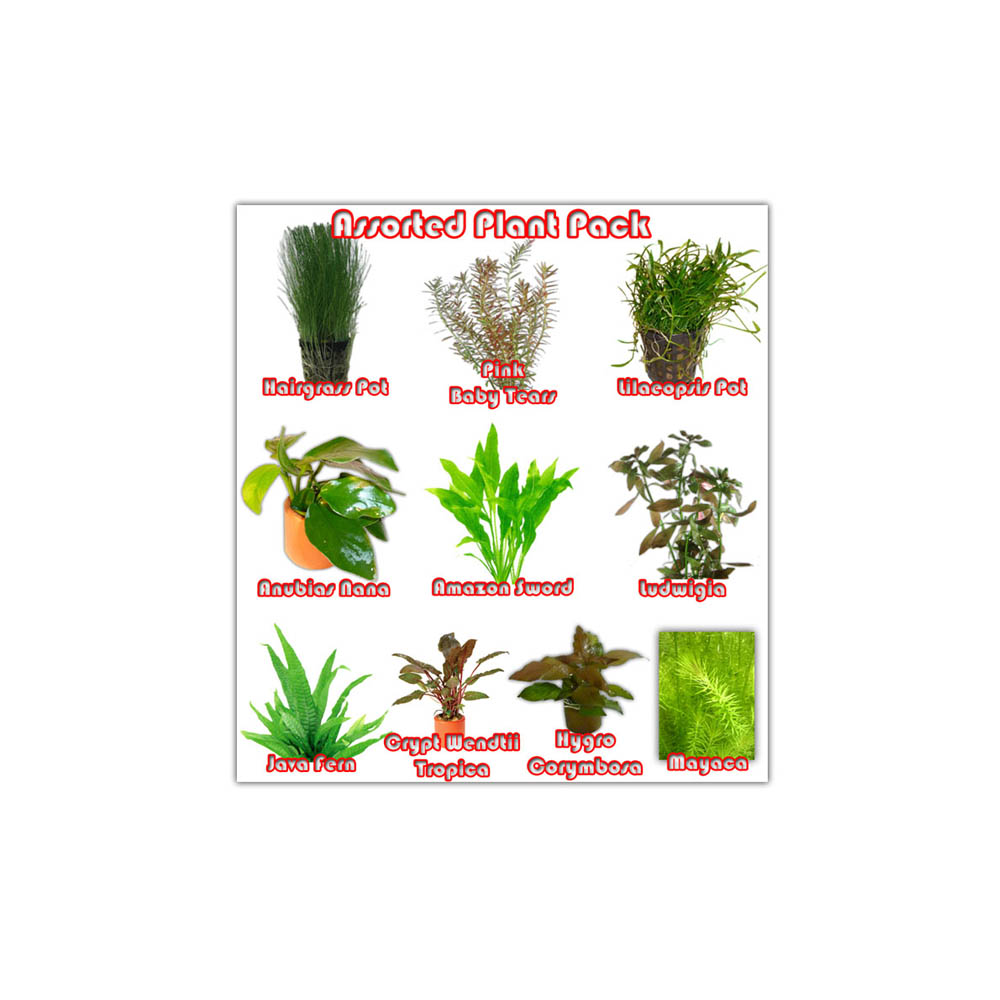 Assorted Plant