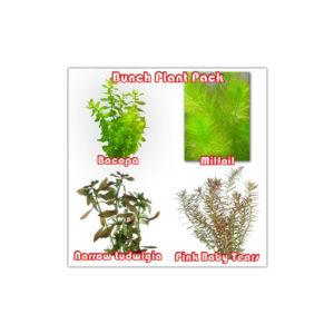 Bunch Plant