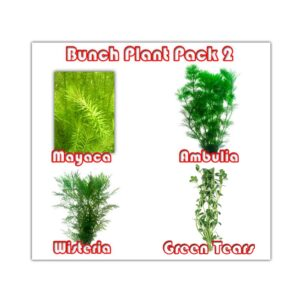Bunch Plant Pack 2