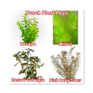 Bunch Plant Pack