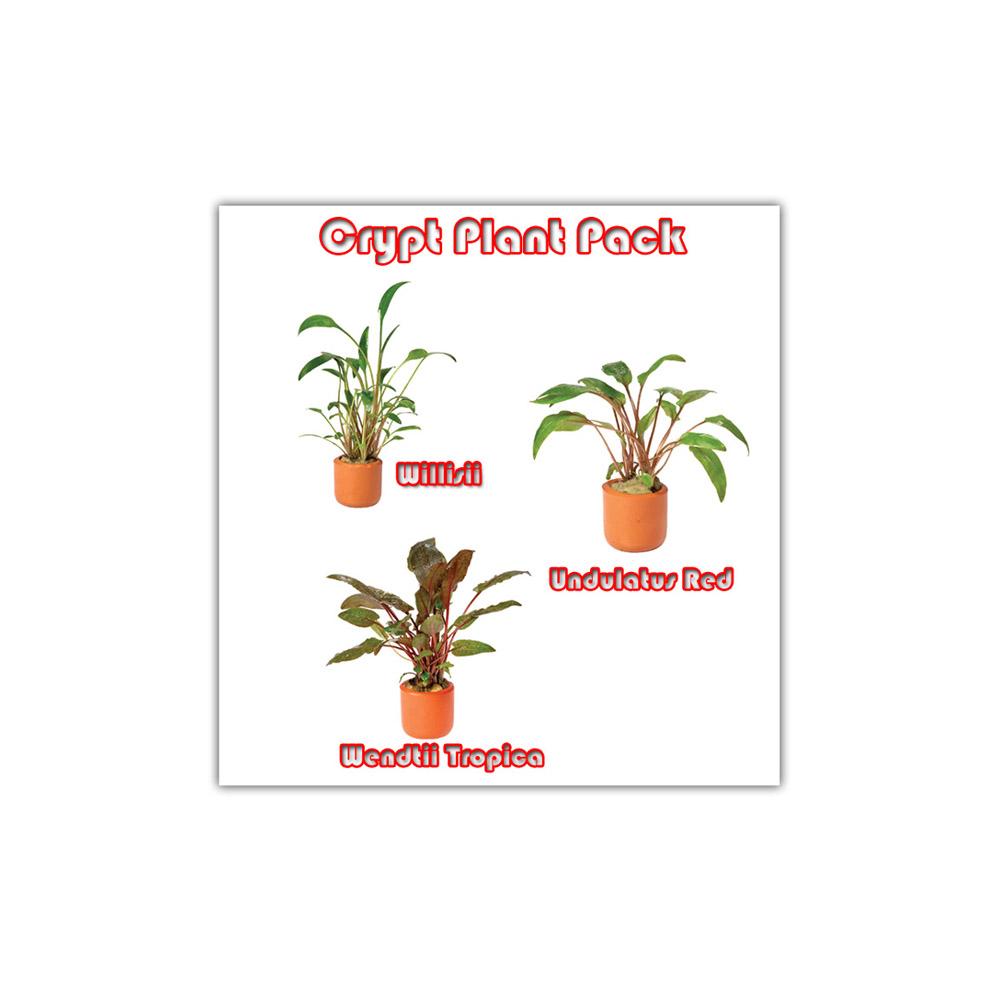crypt plant