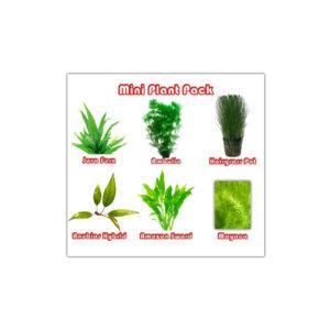 Mini Plant
