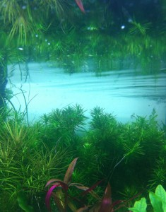 Live Aquatic Plants