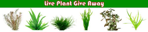 Live Aquatic Plant Give Away