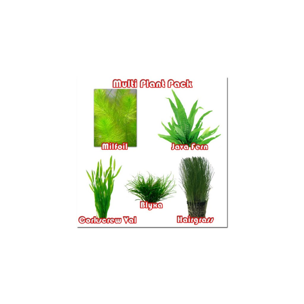 Multi Plant Pack