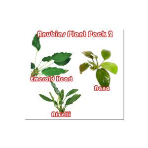 Anubias Plant pack 2