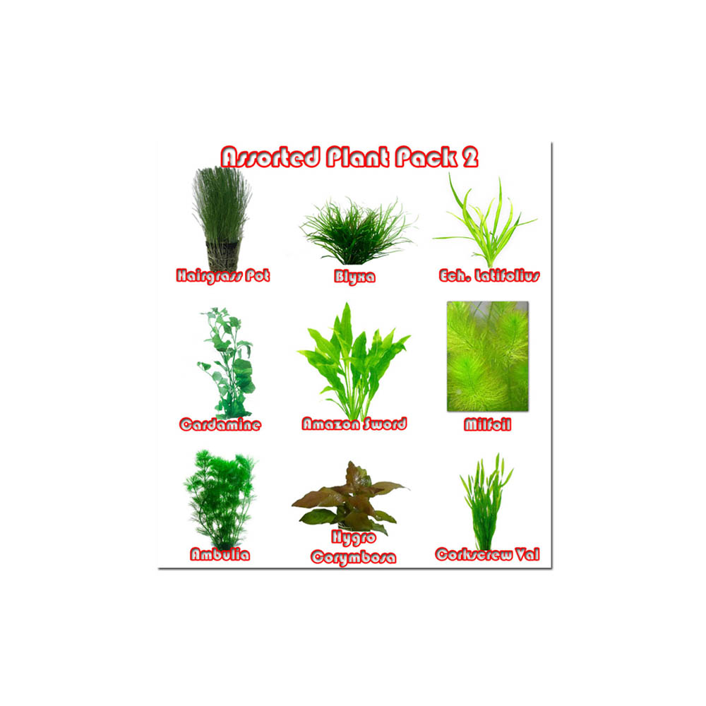 Assorted Plant Pack 2