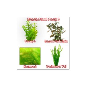 Bunch Plant Pack 3