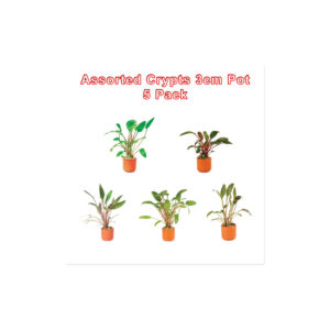Cryptocoryne 3cm Pots Assorted