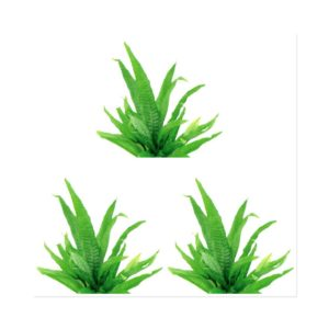 Java Fern Large Pack