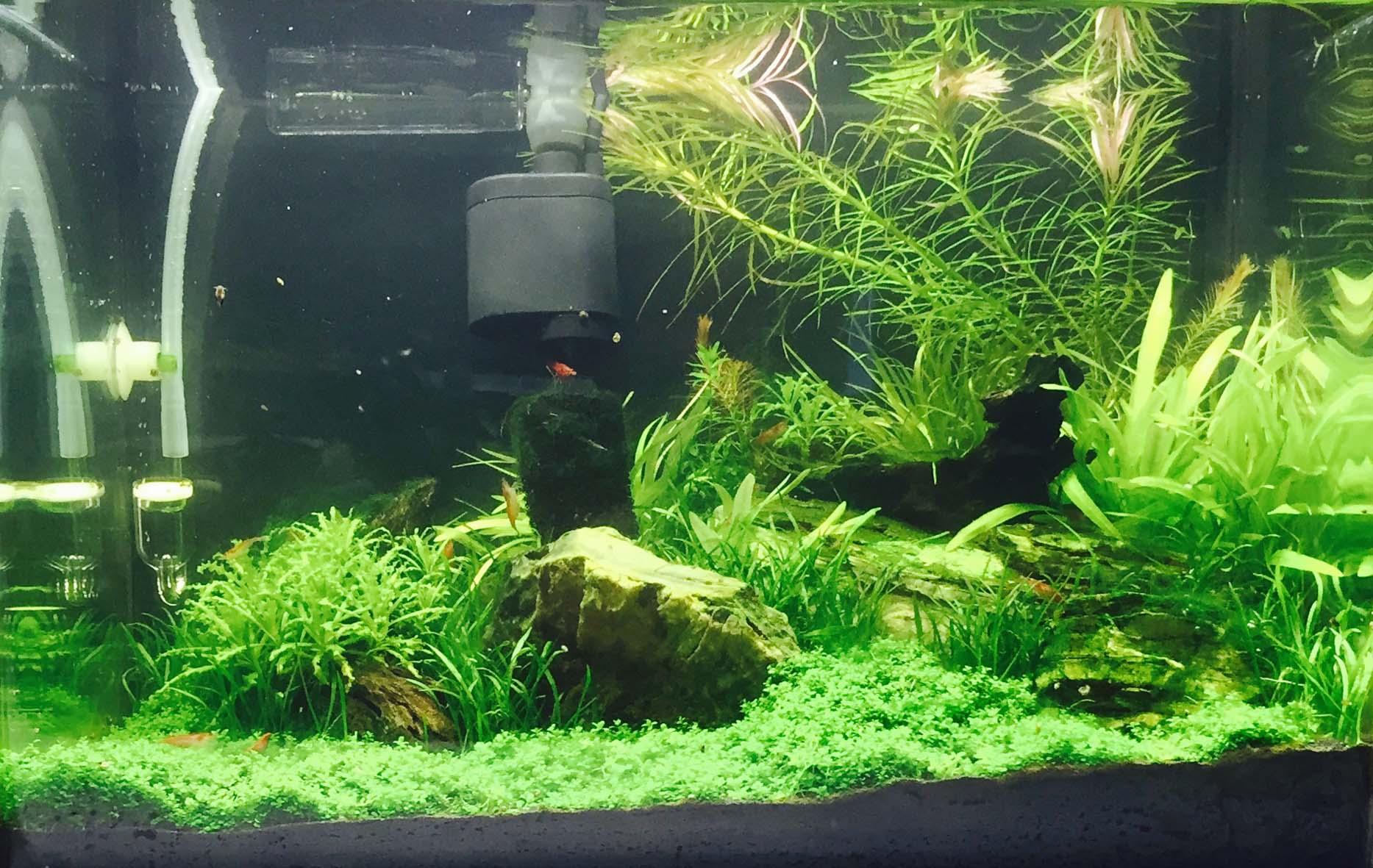 Helping Aquarium Plants Grow