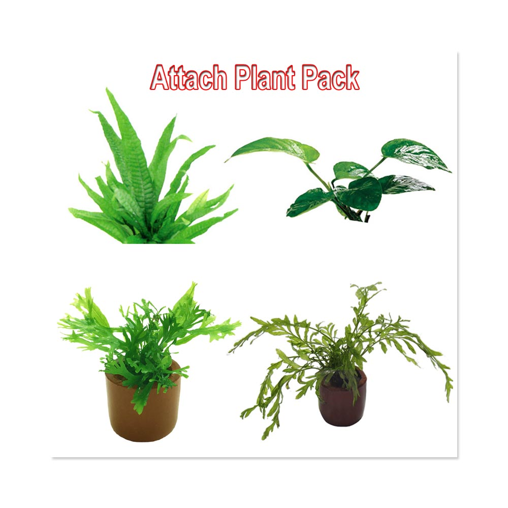 Attach Plant Pack