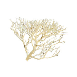 Coral Driftwood Large