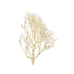 Coral Driftwood Small